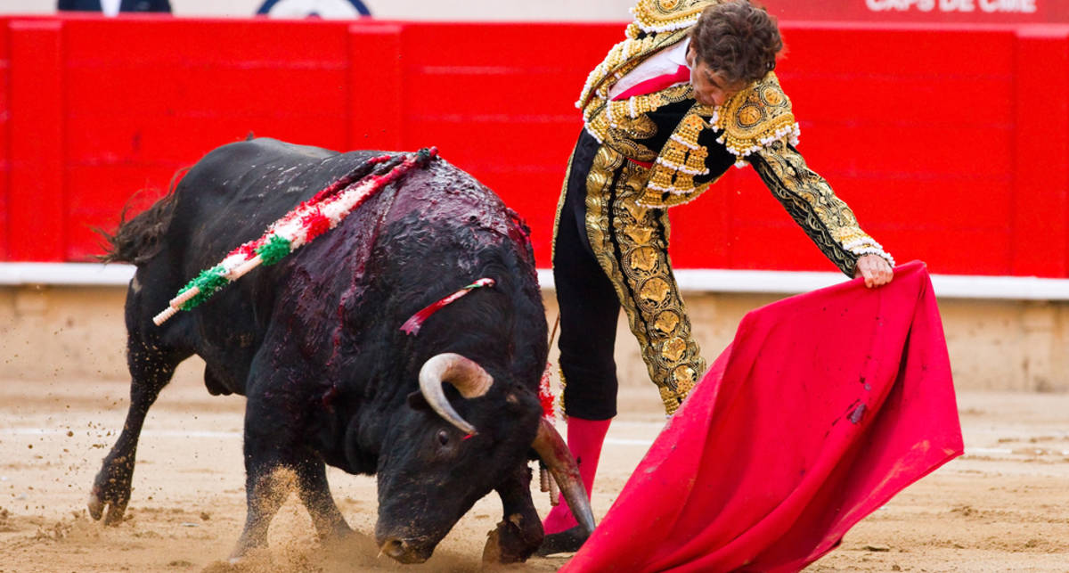 Правда ли, что бык впадает в ярость от красного цвета