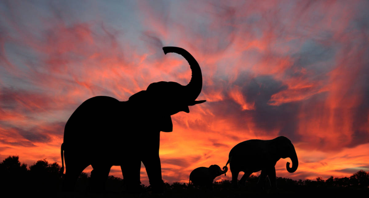 Правда ли, что слоны боятся мышей