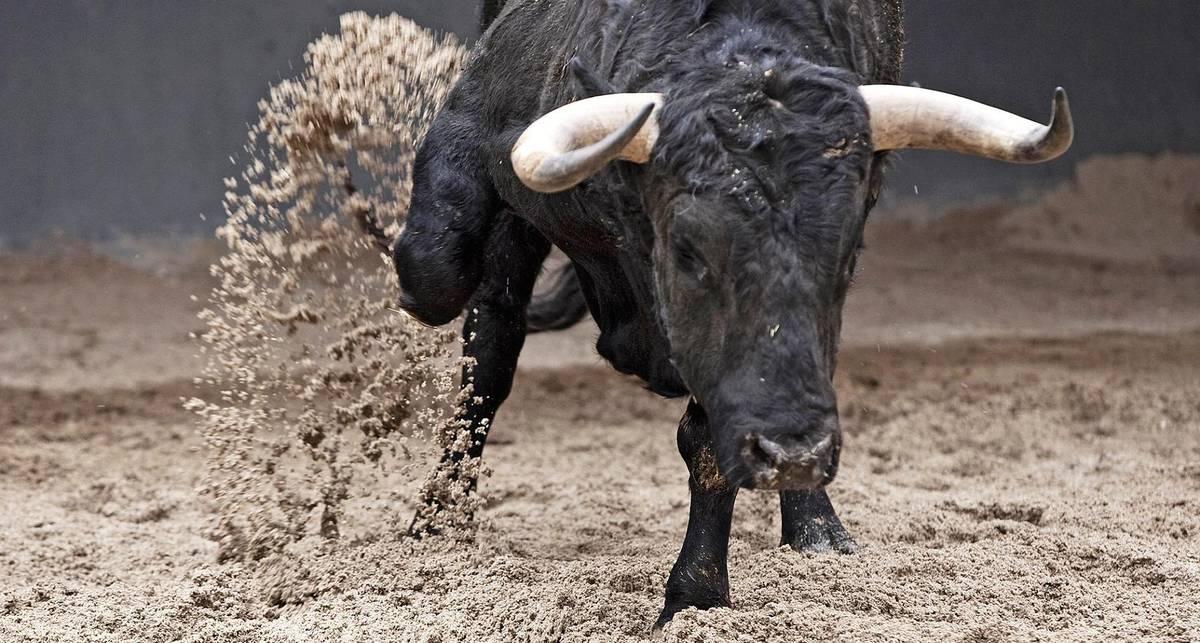 Коровий балет: может ли бык разгромить посудную лавку