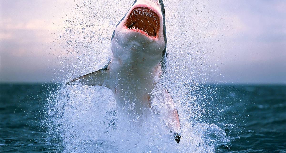 Десятка гигантских акул, пойманных человеком