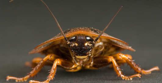 Может ли таракан пережить ядерную катастрофу