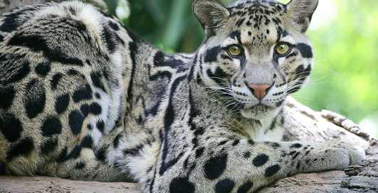 Неестественный отбор: животные, вымершие за последние 100 лет