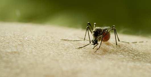 До первой крови: комары, москиты и другие враги человечества