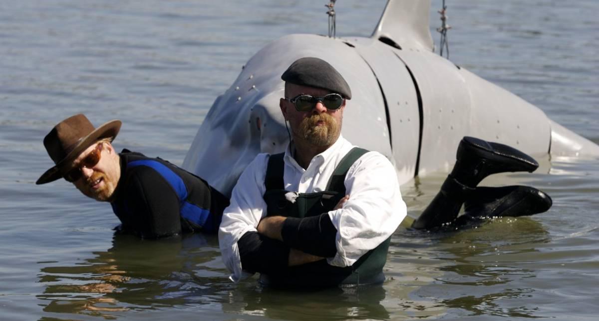 Сдерживают ли дельфины акул от нападения на жертву
