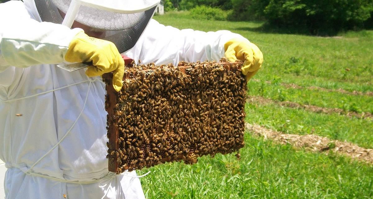 Сможет ли тысяча пчел поднять ноутбук