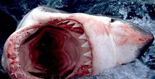 Взорвется ли водолазный баллон, если его прострелить в пасти акулы