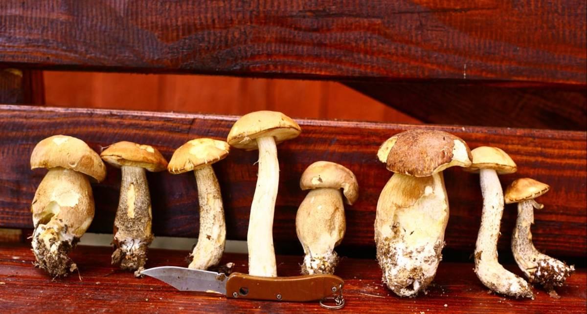 Полезные лайфхаки: как искать, срезать и готовить грибы