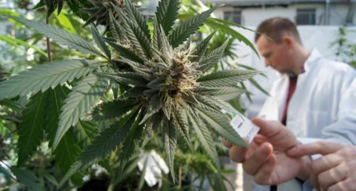 В США впервые разрешили лекарство на основе марихуаны