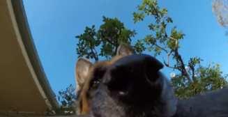 Милое видео, как пёс украл у хозяина камеру GoPro