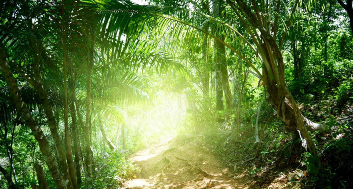 Мужчина уехал в джунгли, чтобы спрятаться от студенческих долгов
