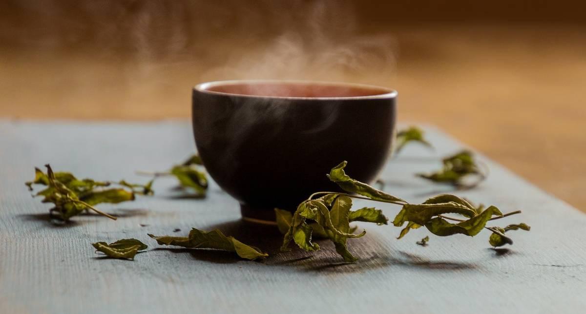 Зеленый чай спасает жизнь: Невероятное открытие ученых