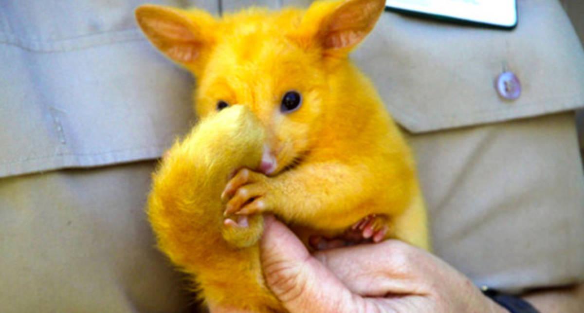 В Австралии найден настоящий Пикачу