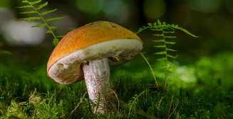Почему полезно есть грибы?