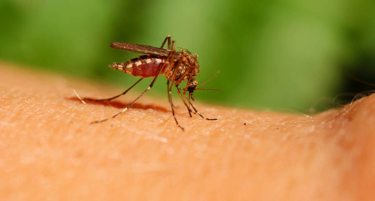 Что делать, если тебя укусило насекомое