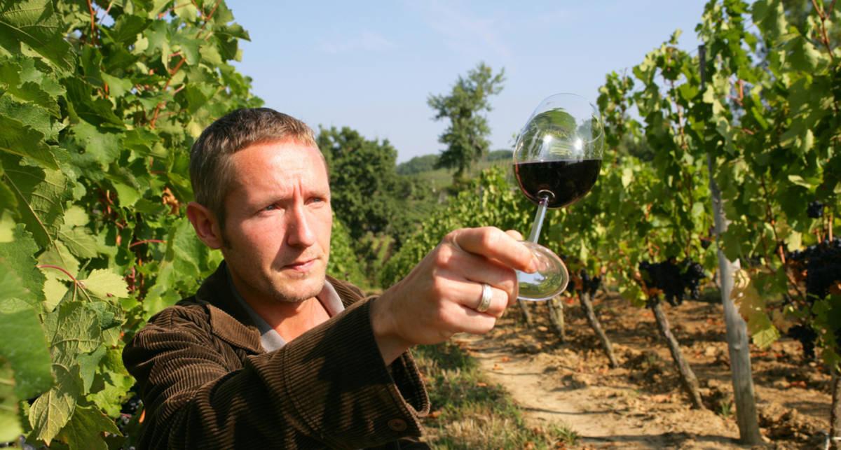 Подавать холодным: вино утекает на север