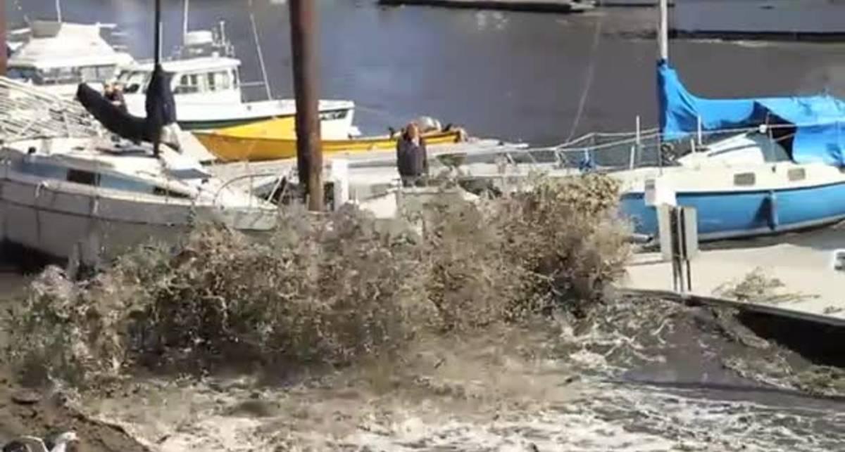 Японский цунами достал Калифорнию
