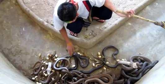 Повелитель змей: уборка в террариуме