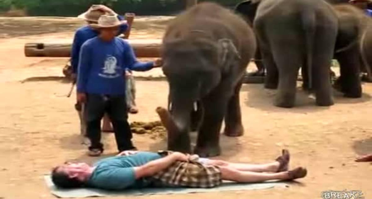 Уролог с хоботом: массаж от слона