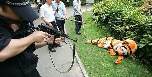 Полосатый рейд: побег тигра-идиота