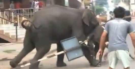 Слон-убийца: коррида по-индийски