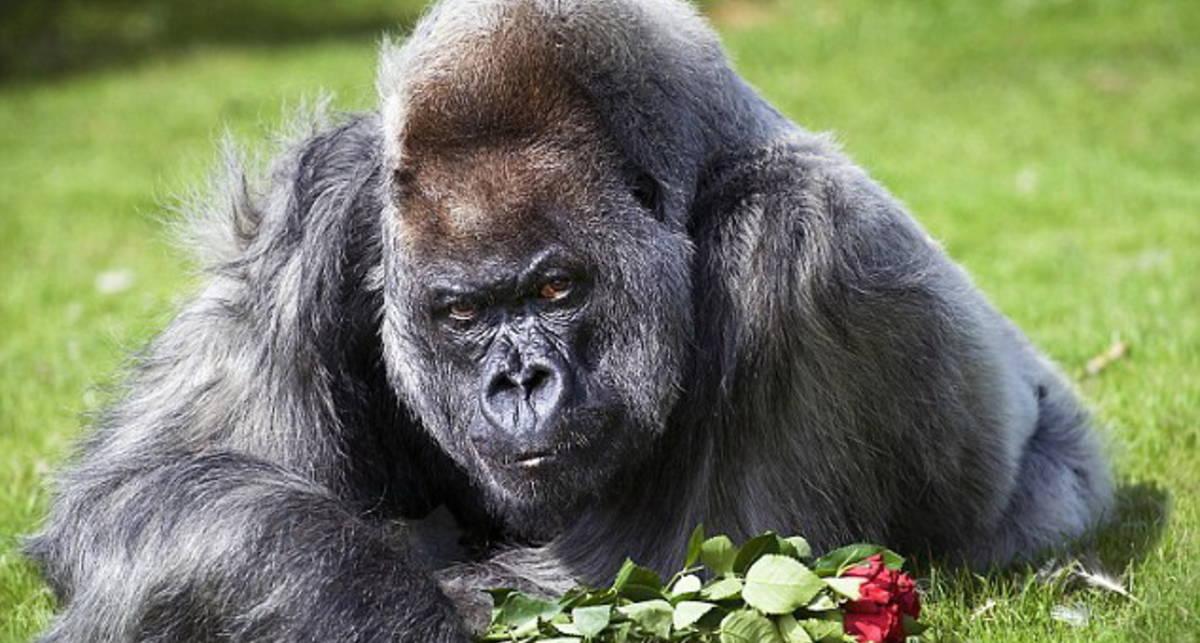 Оскорбление самца: букет для примата