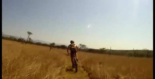 ДТП в Африке: антилопа против велосипеда