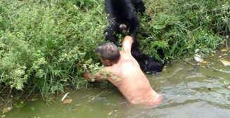 Вендетта обезьян: приматы раскусили алкоголика