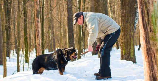 Бег вместе с собакой: полезные советы