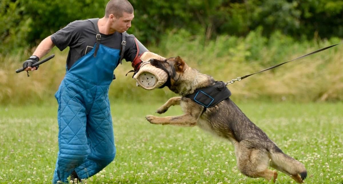 Сильнее зверя: чем отбиться от собаки