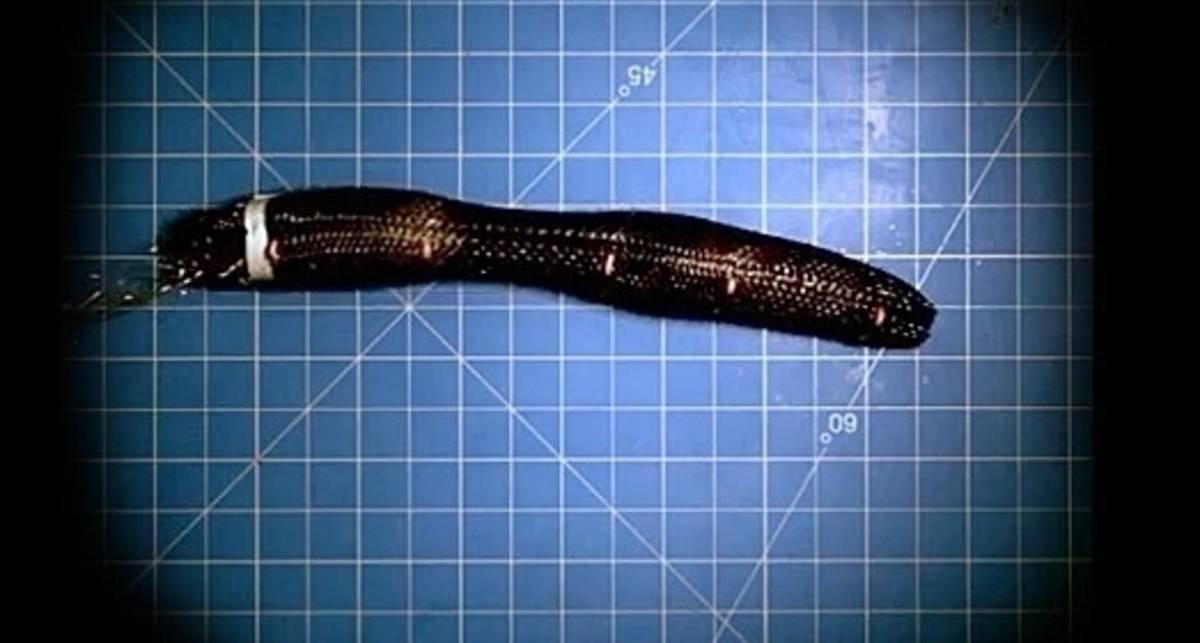 Meshworm: ползучий глаз Пентагона