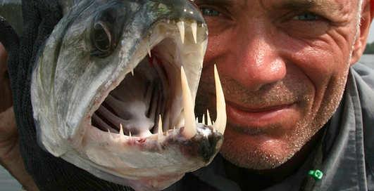Названа рыба, спасающая от инсульта