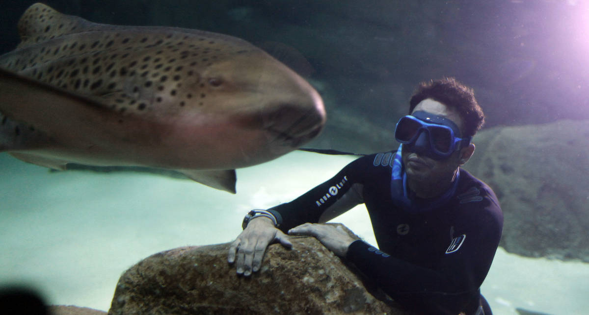 По-мужски: дайвер в компании 25 акул