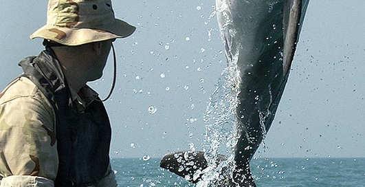 США прощаются с дельфинами-саперами