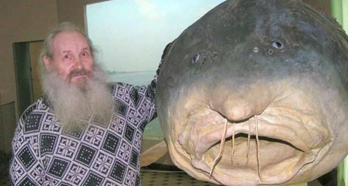 А рыбка непроста: ТОП-10 речных пришельцев