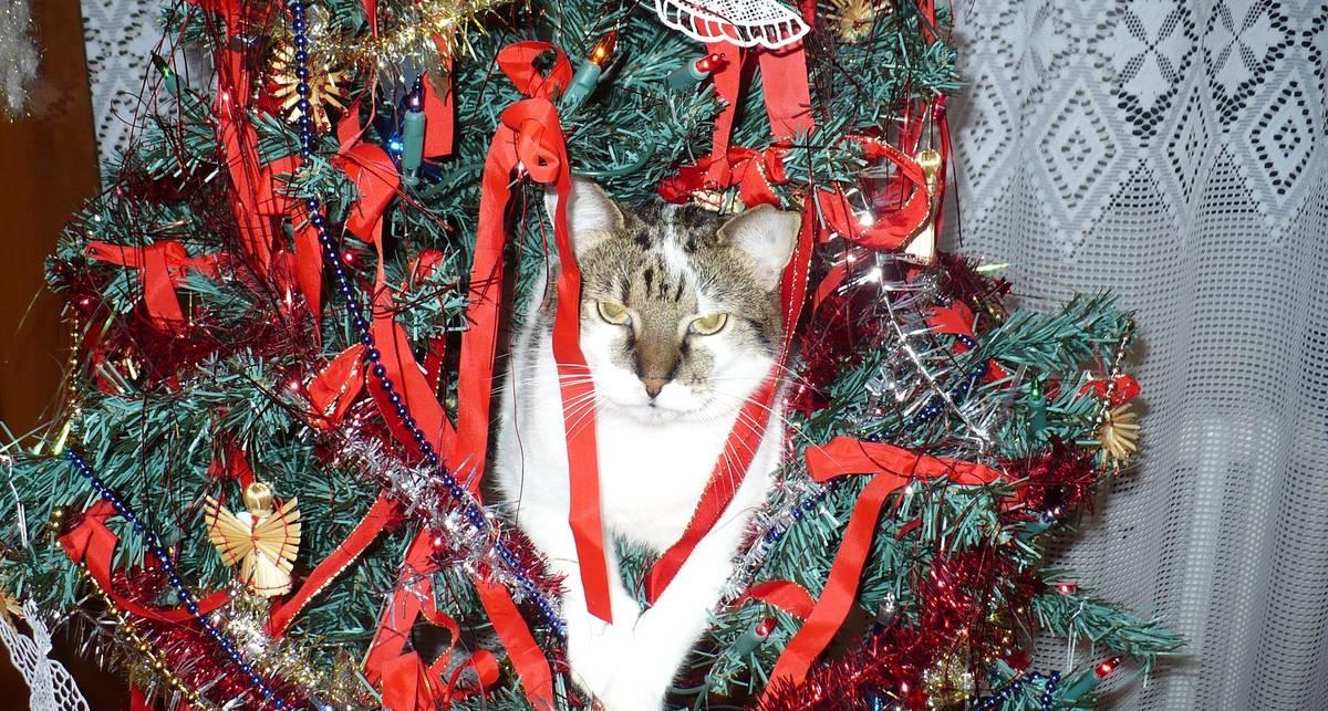 Кот vs елка: как безопасно украсить дом