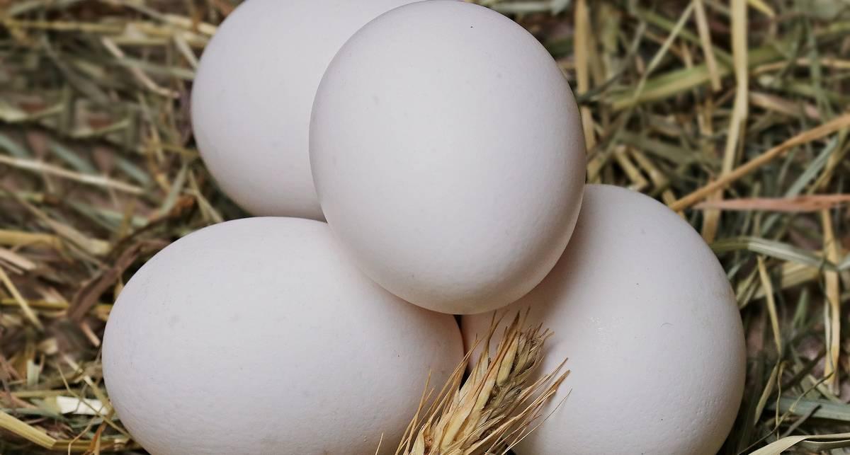 Яйца судьбы: необычный флешмоб в Instagram вывел в топ фото куриного яйца