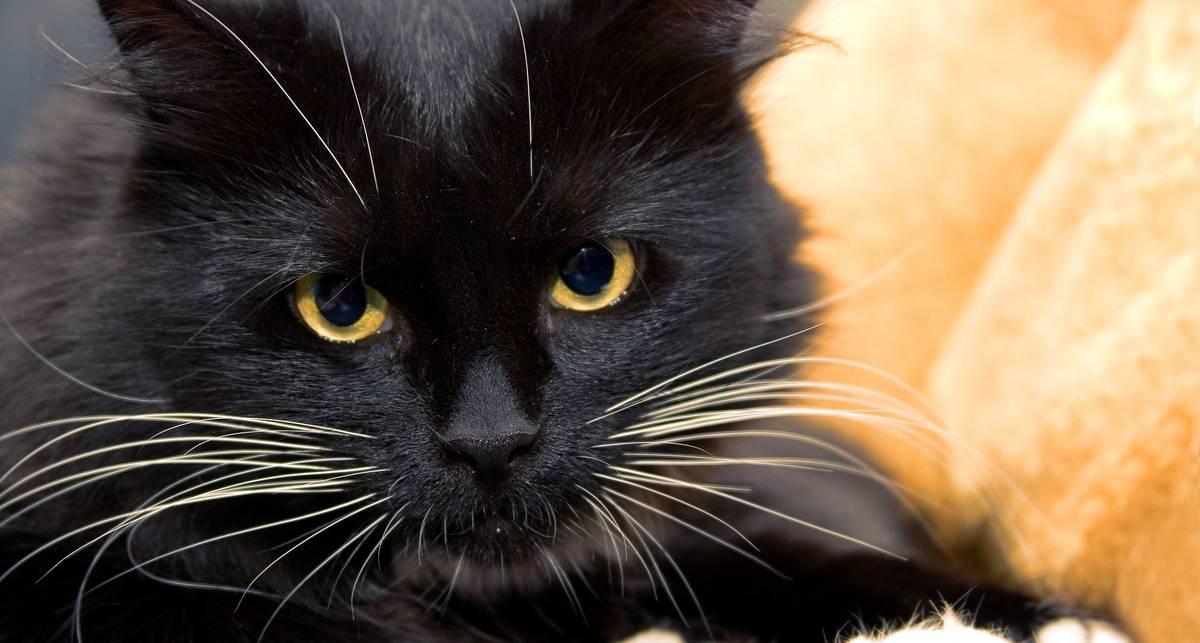 Суеверия и футбол: матч АПЛ остановил черный кот