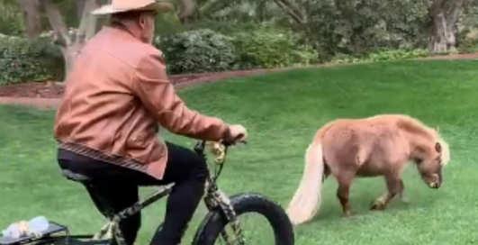 Ничего необычного, просто Арнольд Шварценеггер гонится на велосипеде за пони