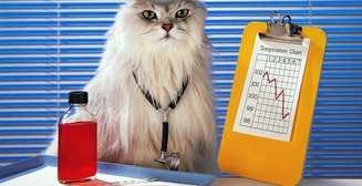 Пять животных, позитивно влияющих на здоровье