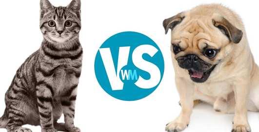 Кто счастливее - владельцы кошек или хозяева собак?