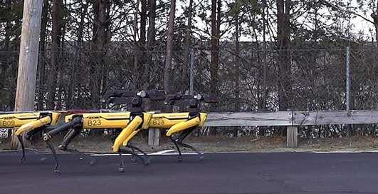 Робопсы: эффектное видео марширующей упряжки собак-роботов