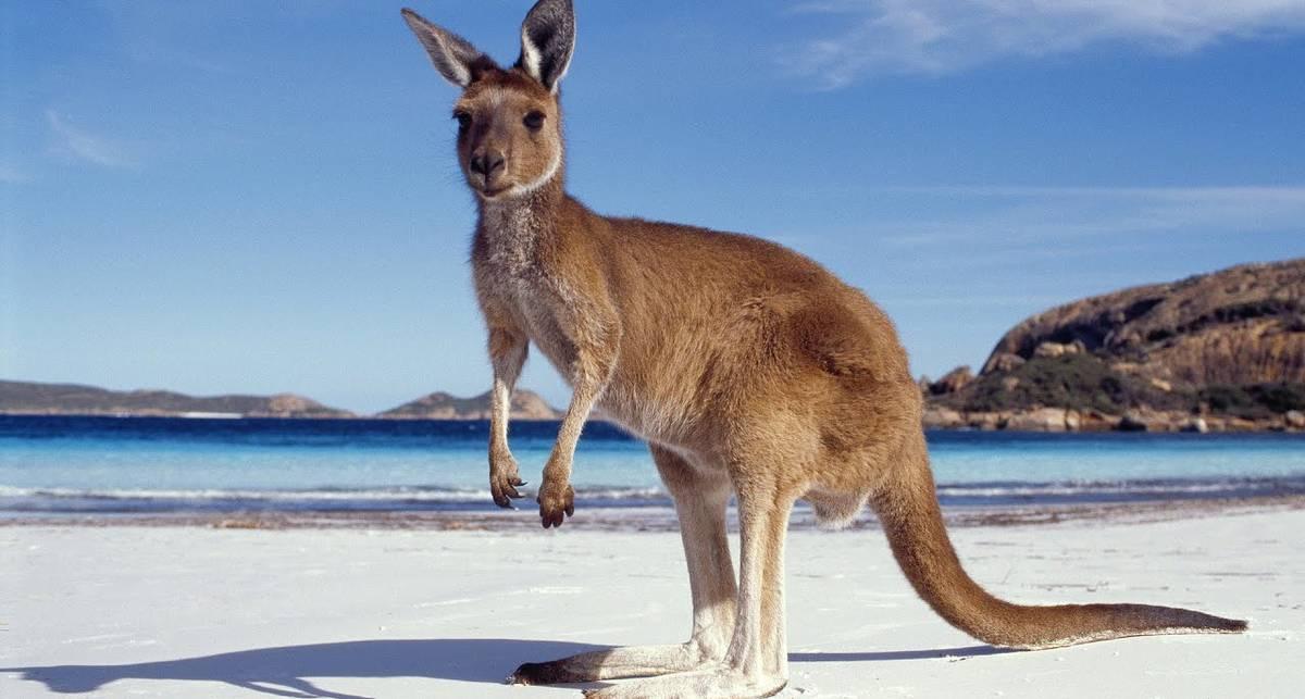 Бикини не по вкусу: кенгуру напугал и разогнал полуголых моделей