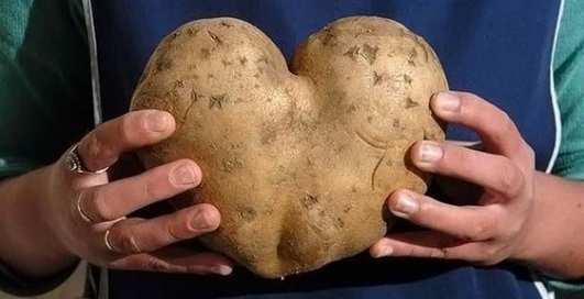 Ода картофелю: топ-5 полезных свойств корнеплода