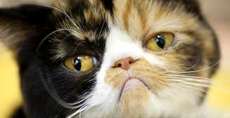 ТОП-10 полезных лайфхаков для владельцев кошек