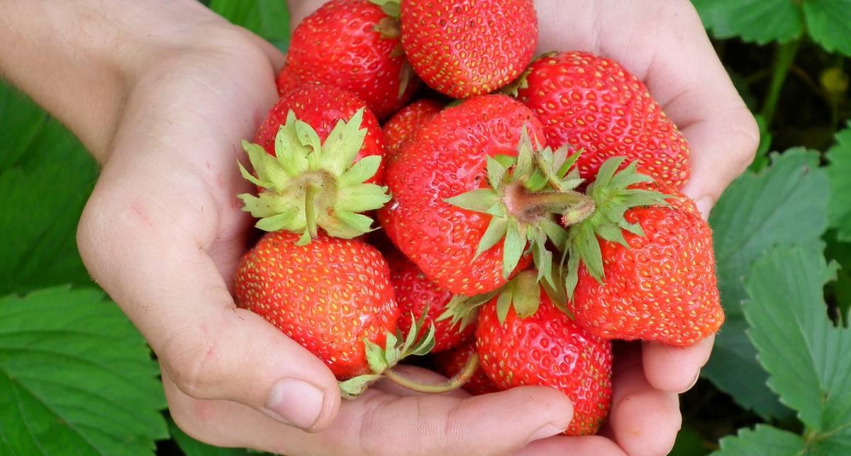Побаловаться клубничкой: ТОП свойств первой летней ягоды